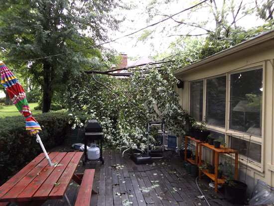 tree branch that fell on the roof